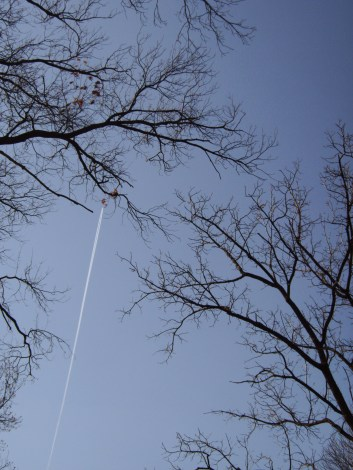 A contrail through bare tree limbs
