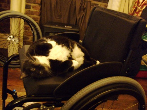 A tuxedo cat resting on a wheelchair